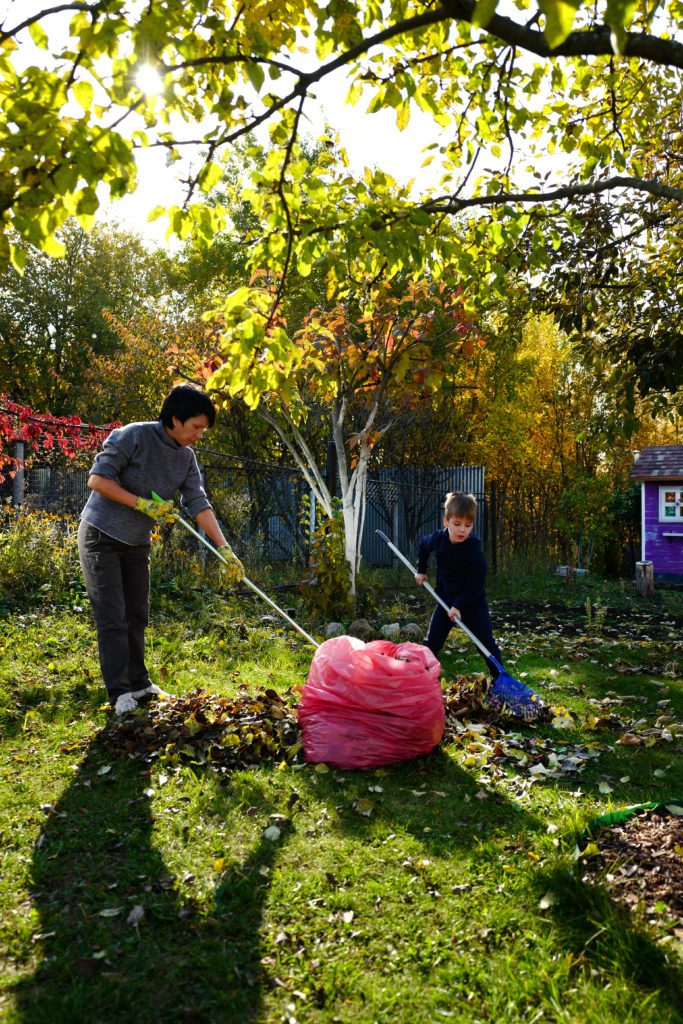 healthy back while racking, avoid hurting back while raking - Caspers Chiropractic Hutchinson and Shakopee